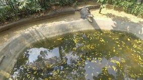 鳄鱼睡觉 影视素材
