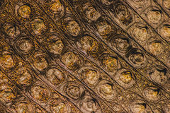 鳄鱼红色皮肤黄色 免版税图库摄影