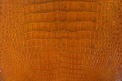 鳄鱼红色皮肤黄色 免版税库存照片
