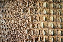 鳄鱼红色皮肤黄色 库存照片