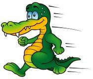鳄鱼赛跑者 库存图片