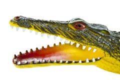 鳄鱼顶头可怕 免版税库存图片