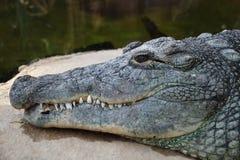 鳄鱼题头 库存照片