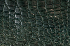 鳄鱼,在绿色的皮革 免版税库存图片