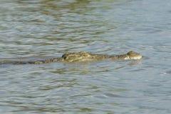 鳄鱼,查莫湖,埃塞俄比亚,非洲 库存照片