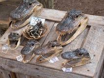 鳄鱼头和脚 库存照片