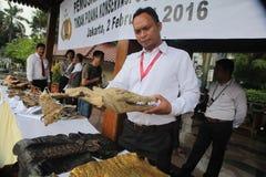 鳄鱼头在印度尼西亚 免版税库存图片
