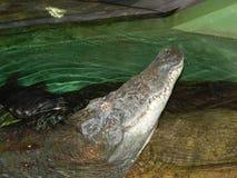 鳄鱼水族馆在上海 免版税库存照片