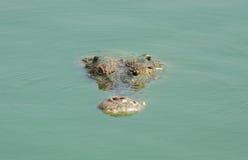 鳄鱼头,当游泳时 免版税库存照片