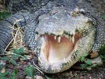 鳄鱼头 图库摄影