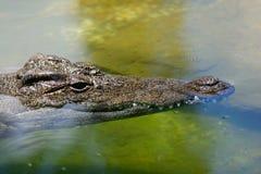 鳄鱼头 免版税图库摄影
