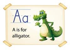 鳄鱼flashcard 库存照片