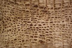 鳄鱼snakeskin纹理 图库摄影
