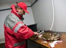 鳕鱼去骨切片的渔夫 免版税图库摄影