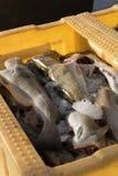 鳕鱼在TÃ ³ rshavn,法罗群岛的市场上 库存照片
