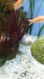 鳗鱼 免版税图库摄影