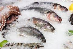鳟鱼、雪鱼和其他海鲜在市场显示 免版税库存图片