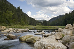 鳟鱼小河在南达科他黑山  免版税库存图片