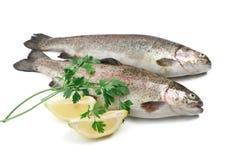 鳟鱼用柠檬和荷兰芹 图库摄影