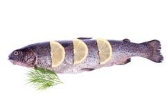 鳟鱼用柠檬 库存照片
