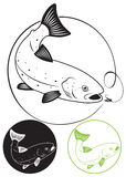 鳟鱼鱼 库存照片