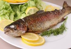 鳟鱼 免版税库存图片