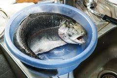 鳟鱼 免版税库存照片