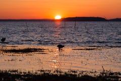 鸟、湖和日落 图库摄影