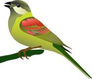 鸟一点 免版税图库摄影