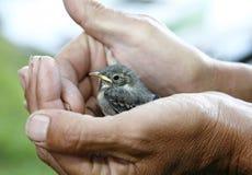 鸟一点 免版税库存图片