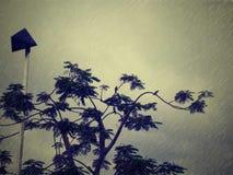 鸟下着雨 免版税库存照片