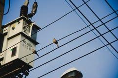 鸟不单独 免版税库存图片