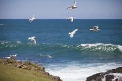 鸟临近海洋 免版税库存照片