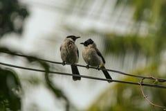 鸟二 免版税库存照片
