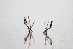 鸟二 图库摄影