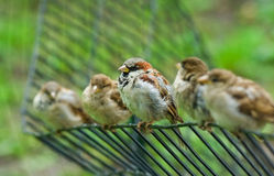 鸟五 免版税库存图片