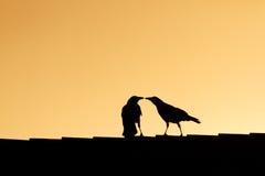 鸟亲吻 免版税库存照片