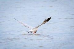鸟传染性的鱼 免版税图库摄影