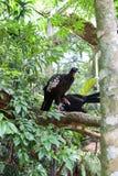 鸟公园的鸟封入物在福斯-杜伊瓜苏,巴西 免版税库存图片