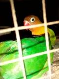 鸟关进了笼子 免版税库存图片