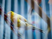 鸟关进了笼子 免版税库存照片