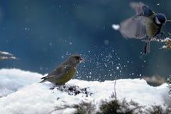 鸟冬天 免版税库存照片