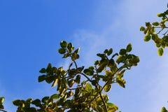 鸟凝视远离树 免版税库存图片