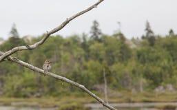 鸟分行图画铅笔 库存图片