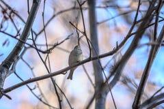 鸟分行本质俄国原野世界 库存照片