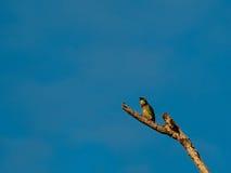 鸟分行本质俄国原野世界 免版税图库摄影