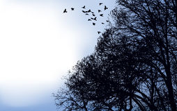 鸟分行飞行了群  库存图片