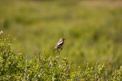 鸟分行 图库摄影