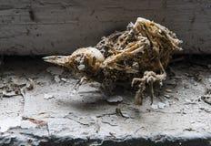 鸟切尔诺贝利的骨骼 免版税库存照片