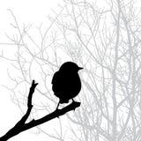 鸟剪影向量 免版税库存图片